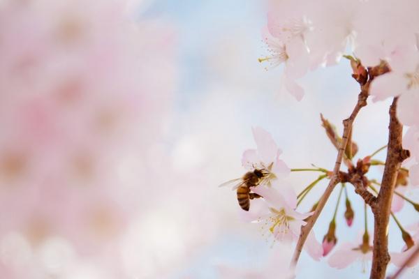 pink pollen close-up