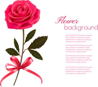 pink rose beautiful background vectors
