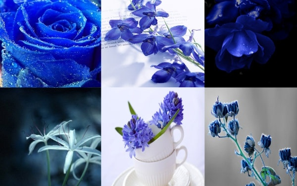 plant flowers hd picture the quiet elegance of the blue