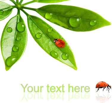 plant with ladybug picture 10