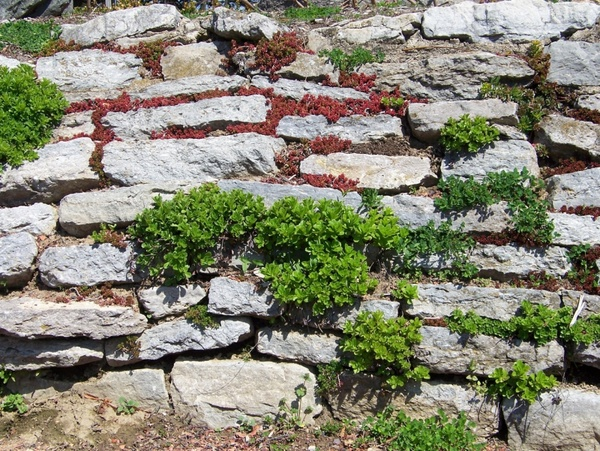 plants in a stone wall