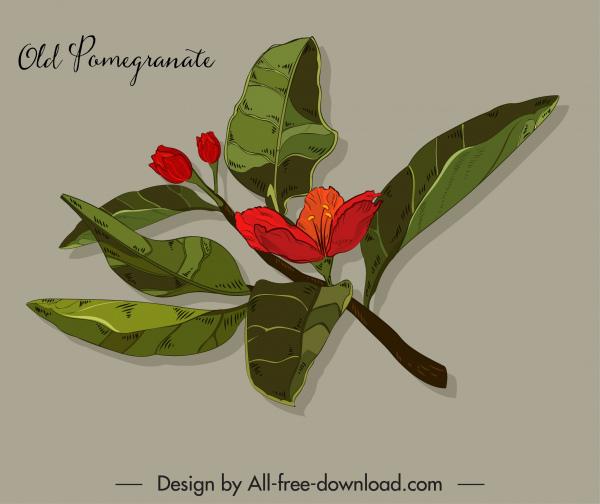 pomegranate flower icon colored classical design