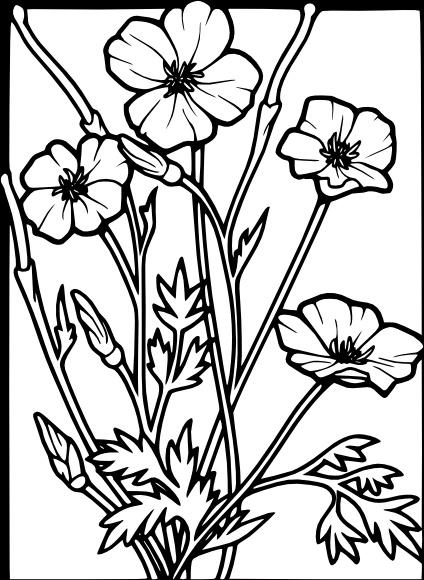 Poppy clip art free vector in open office drawing svg g poppy clip art mightylinksfo