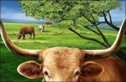 prairie cattle highdefinition layered psd