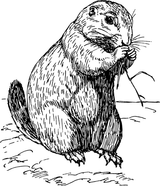 prairie dog free vector in open office drawing svg svg vector Puppies On the Prairie prairie dog free vector 460 53kb