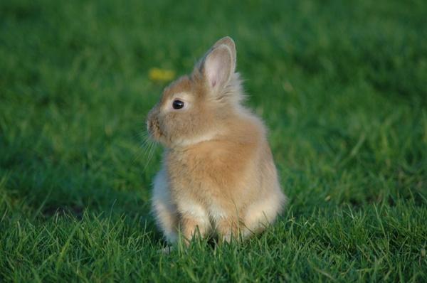 prairie rabbit grass