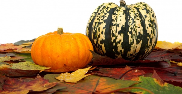 pumpkins and leaves on white