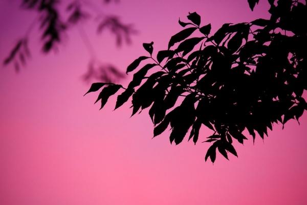 purple leaf silhouette