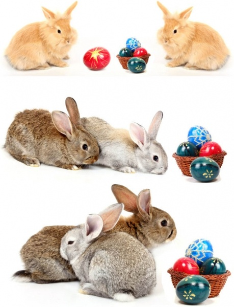 rabbit highdefinition picture