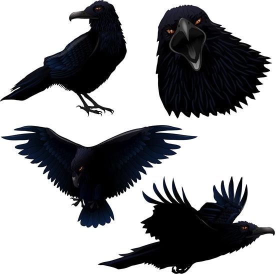 Raven Vector Free Vector Download 21 Free Vector For