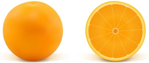 realistic fruit 01 vector