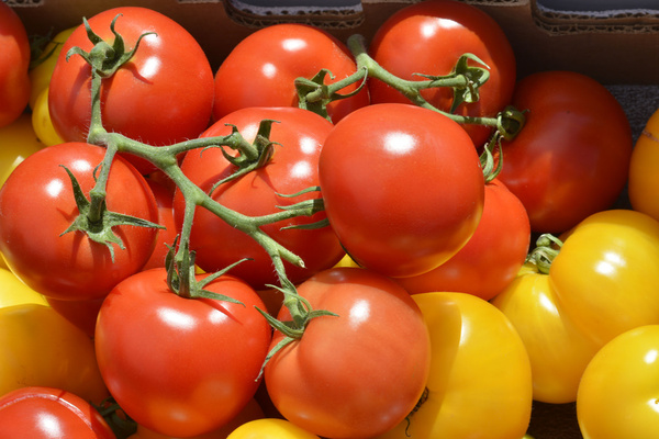 red amp yellow tomatoes