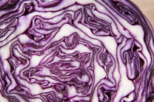 red cabbage brassica oleracea kohl
