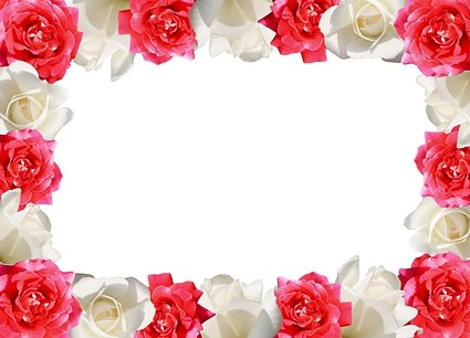 red rose white rose side of picture