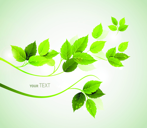 refreshing green leaves background vector