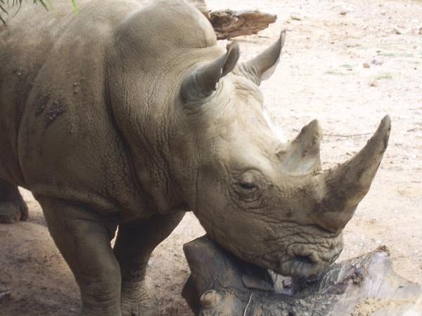 Free Rhino