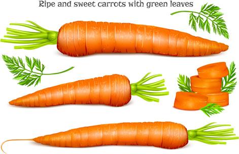 Free Vector Carrots Free Vector Download 309 Free Vector