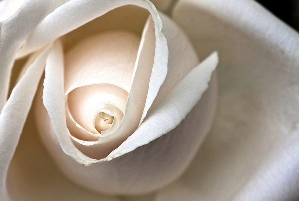 rose center 4