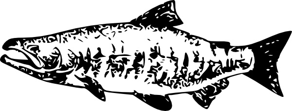 vector salmon for free download about 9 vector salmon sort by newest first vector salmon for free download about