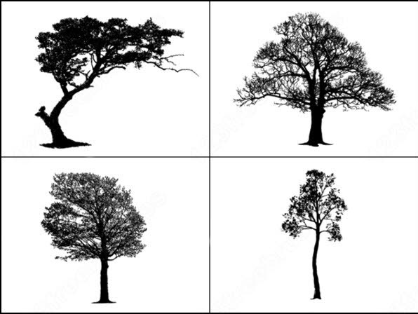 sample file from tree master vector and photoshop brush