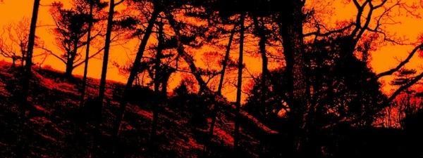 scary dark forest