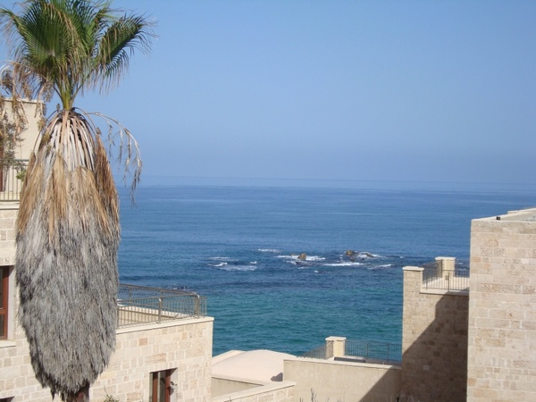 sea cliff palm tree