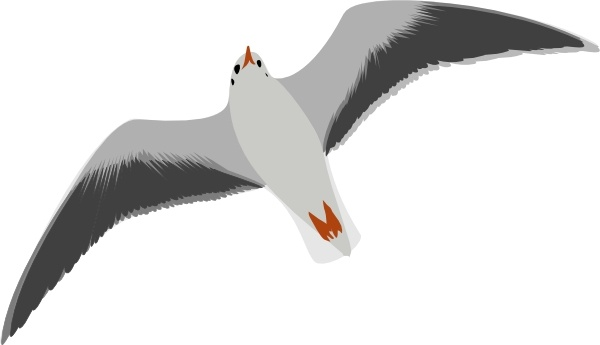 sea gull seagull clip art free vector in open office drawing svg rh all free download com seagull clipart free seagull pictures clip art