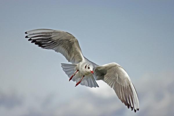 seagull lake balaton nature