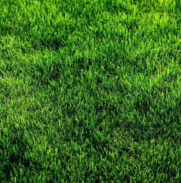 series of pictures of the green 06