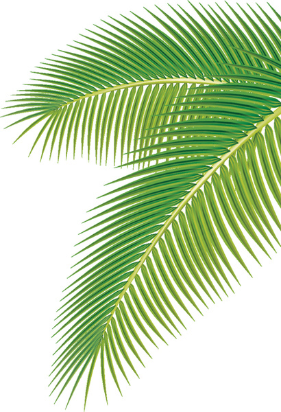 palm free vector download  298 free vector  for commercial