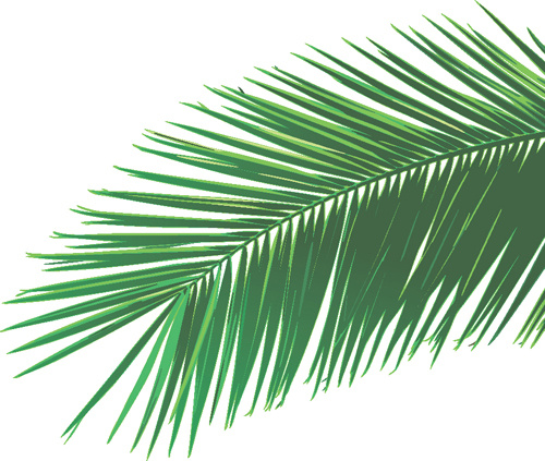 set of green palm leaves vector