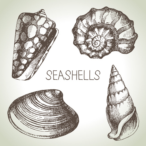seashell svg free vector download  85 049 free vector  for