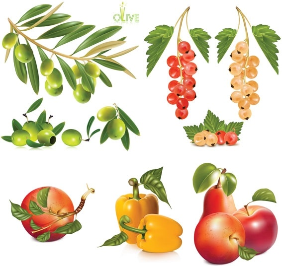 several fruits vector