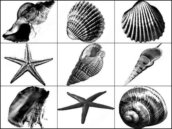 shells brush