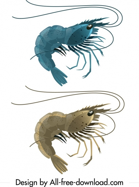 shrimp icons shiny blue grey curved mockup outline