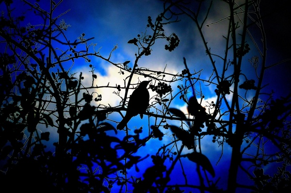 silhouette of birdlight effects