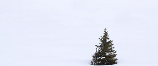 single tree in snow