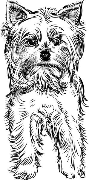 sketch dog design vector