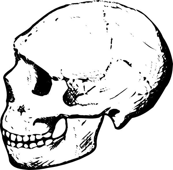 Skull Clip Art Free Vector In Open Office Drawing Svg