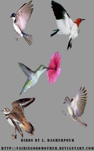 small birds psd
