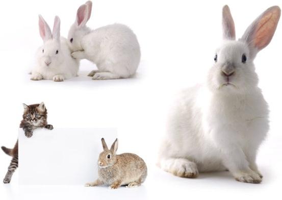 small rabbit hd picture