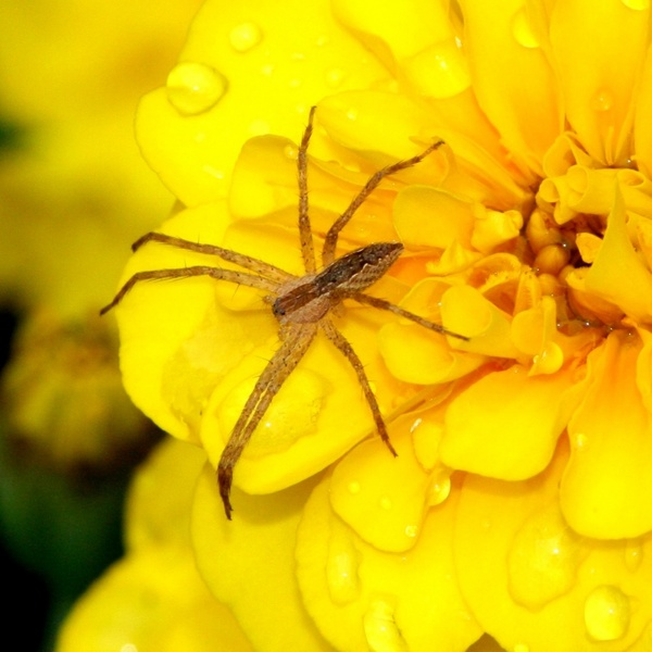 Small spider arachnid predator Free stock photos in JPEG ...