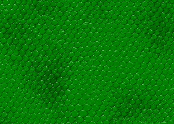snake skin texture 01 hd picture