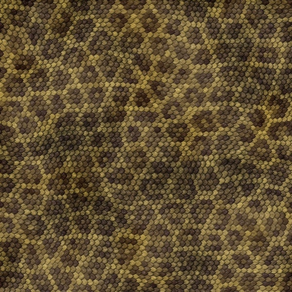 snake skin texture 04 hd pictures