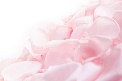 soft pink rose petals stock photo