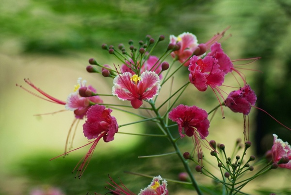 south goa flowers