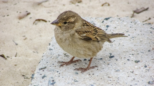 cute tiny sparrow in nature