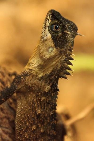 spiky lizard