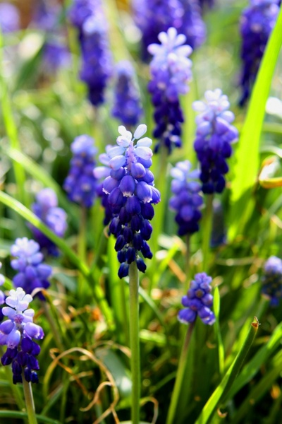 Spring Flower Images Free Stock Photos Download 13326 Free Stock