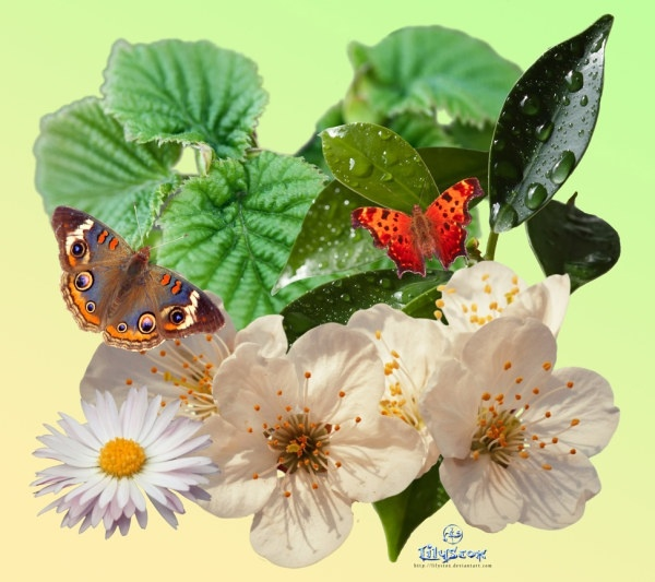 springpack plant butterfly psd